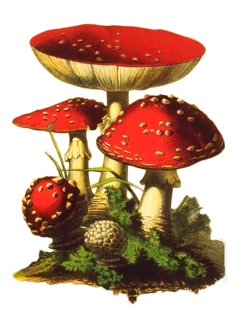Circle of red mushrooms