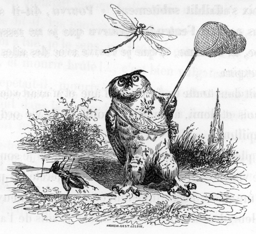 Owl catching dragonfly