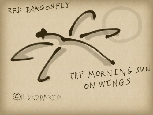Red dragonfly haiga