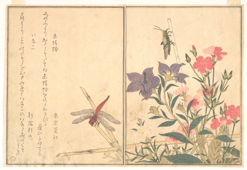 Dragonfly and Grasshopper